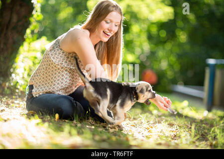 domestic dog (Canis lupus f. familiaris), young woman sitting in forest ground and playing with a cute Puggle, Germany - Stock Photo