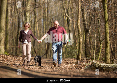 Flat Coated Retriever (Canis lupus f. familiaris), couple with dog walking through the forest, Germany - Stock Photo