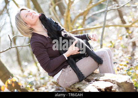 Flat Coated Retriever (Canis lupus f. familiaris), woman with whelp in a forest, Germany - Stock Photo