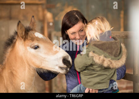domestic horse (Equus przewalskii f. caballus), mother with a little girl on arm visiting a foal in a stable, Germany - Stock Photo