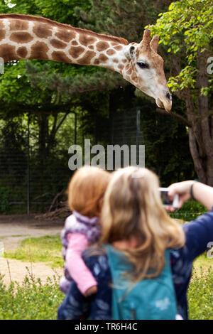 Angolagiraffe, Angola-Giraffe (Giraffa camelopardalis angolensis), Mutter mit Tochter auf dem Arm macht ein Foto von einer Giraffe im Zoo, Deutschland - Stock Photo