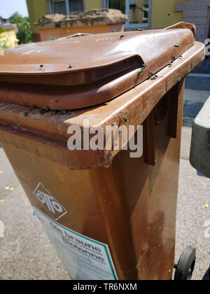 a lot of flies on a organic waste collection bin in summer, Germany - Stock Photo