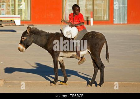 Domestic donkey (Equus asinus asinus), boy on a donkey transporting a sack, Namibia - Stock Photo