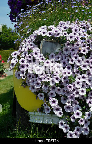 garden petunia (Petunia x hybrida, Petunia-Hybride), car overgrown with blooming petunias, France, Brittany - Stock Photo