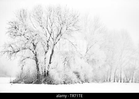 trees at the edge of a field in winter, Germany, Bavaria - Stock Photo