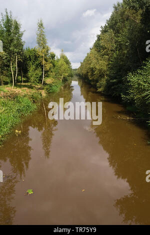 Forest along water at Engbertsdijksvenen in summer, Netherlands, Overijssel, Engbertsdijksvenen - Stock Photo