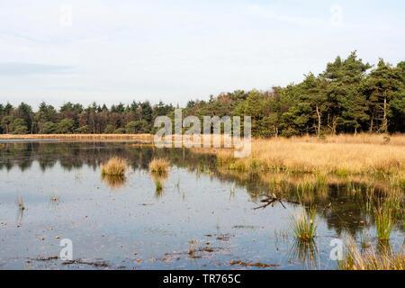 lake at Het Gooi in autumn, Netherlands, Northern Netherlands, Het Gooi - Stock Photo