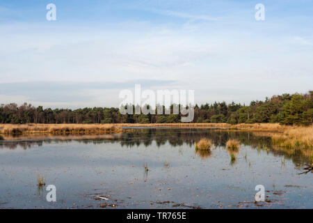 lake at Het Gooi in autumn, Netherlands, Northern Netherlands, Het Gooi - Stock Photo
