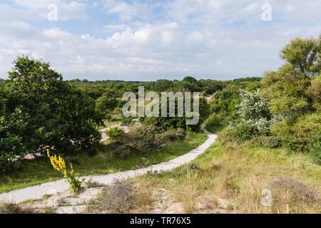 Path through Meijendel dunes in summer, Netherlands, South Holland, Meijendel, Hollandse Duinen National Park - Stock Photo