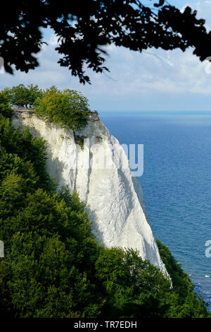The Konigsstuhl dramatic white chalk cliffs of Jasmund National Park on the German island of Rügen, in the Baltic Sea Germany. - Stock Photo