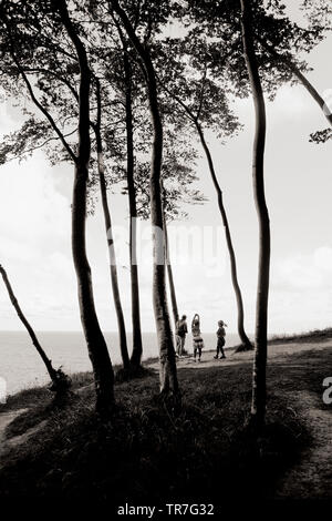 Visitors enjoying beech forest and cliff views of Jasmund National Park on the German island of Rügen, Baltic Sea Germany. - Stock Photo