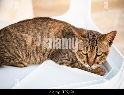 Brown stripes cat relax and looking to camera - Stock Photo