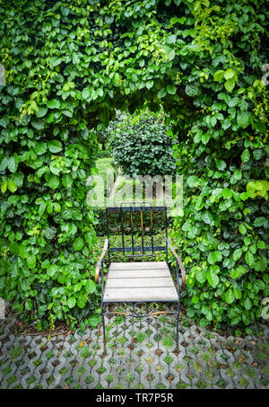 Green plant vine growing on arch with leaves tree and vintage chair in the garden park nature background - Stock Photo