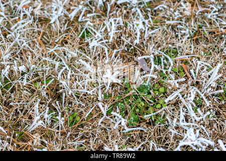 Ice crystals on dry grass and green leaves. Frosty grass nature background. Selective focus - Stock Photo