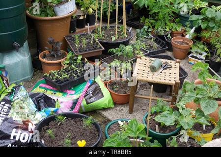 Small town garden in Spring. - Stock Photo