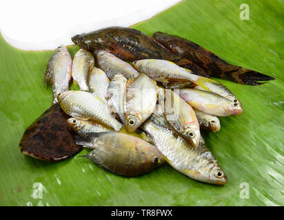 fresh small fish various types with fish goby siamese mud carp on banana leaf - Stock Photo