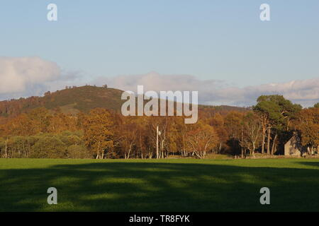 Moorland Hill and Autumn Silver Birch Woodland beyond a Pasture Field on an Autumn Evening. Muir of Dinnet NNR, Cairngorms, Scotland, UK. - Stock Photo