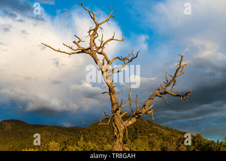 The bare branches of a dead tree illuminated by sunset light contrasted against high hills and a dramatic evening sky - Sangre de Cristo Mountains - Stock Photo