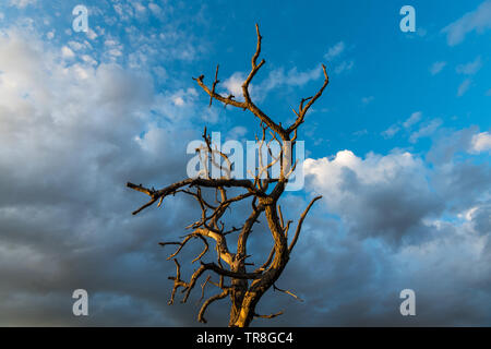 The bare branches of a dead tree contrasted against beautiful sky of dramatic clouds at dusk - Sangre de Cristo Mountains near Santa Fe, New Mexico - Stock Photo