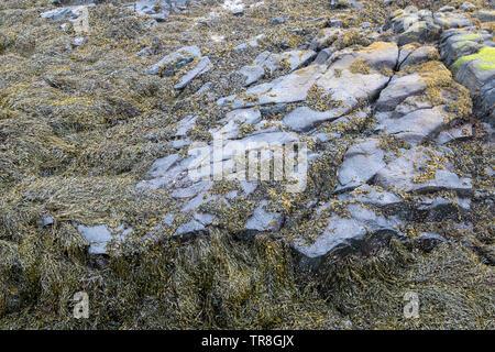 Rock detail in Scotland - Stock Photo