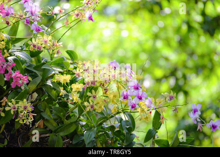 Beautiful orchid flower blossoming on green nature spring garden flowers colorful plant and bokeh background - Stock Photo