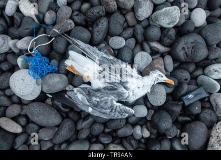 Dead Gull on beach near plastic rubbish. - Stock Photo