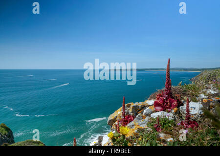 A seascape with an unusual  red plant in the foreground, Wales - Stock Photo