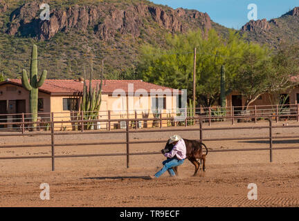 Weekly rodeo at White Stallion Ranch, a dude ranch outside Tucson, AZ. Here one of the ranchers is bulldogging, also called steer wrestling, where a h - Stock Photo