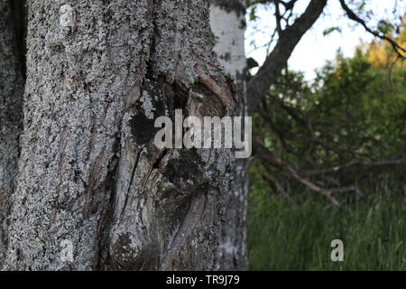 A close-up of a tree trunk with green nature and a birch tree in the back. - Stock Photo