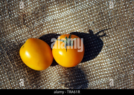 Couple yellow tomatoes on a rough texture sackcloth background, close up organic texture background, top view - Stock Photo