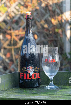 Sint Gillis waas, Belgium - November 22, 2018: solid blond Belgian specialty beer Filou with cold glass in the rain - Stock Photo