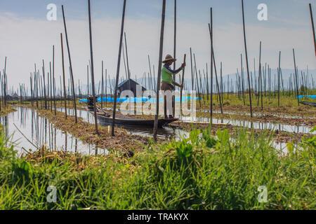 Floating vegetable gardens at Inle Lake, Myanmar - Stock Photo