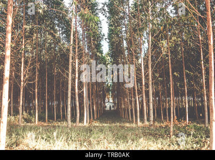 Dramatic Mysterious house in the woods - eucalyptus trees - Stock Photo