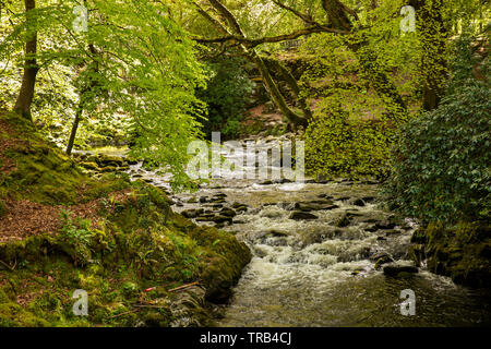 Northern Ireland, Co Down, Bryansford, Tollymore Forest Park, Shimna River flowing through forested valley beside marked trail - Stock Photo