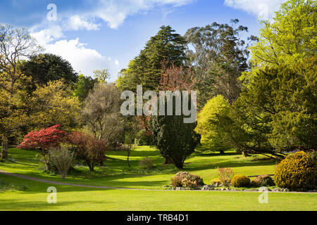 Northern Ireland, Co Down, Bryansford, Tollymore Forest Park, landscaped parkland - Stock Photo