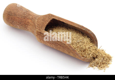 Liquorice ground in a wooden scoop over white ackground - Stock Photo