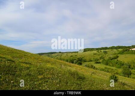 Chalk grassland on hillside at Austin Spring near Romney Street, Kent, in North Downs. Early June - Stock Photo