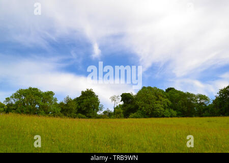 Cirrus cloud high above Romney Street near Darent Valley, Kent, England, UK in early June. Wildflower meadows and ancient woods abound in the Downs - Stock Photo