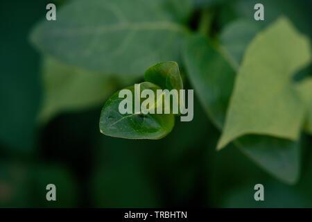 green leaf plant being born