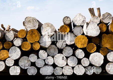 Pile of wooden logs painted white and yellow