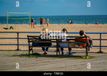 Two woman, man and the dog between them are sitting on the Bench in front of the beach and watching people play volleyball. - Stock Photo