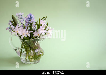 Bouquet of white spring flowers Chionodoxa in a small glass vase on a green background with copy space - Stock Photo