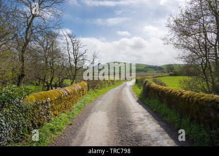 Country lane near Clun in the Shropshire countryside on a beautiful sunny spring day. - Stock Photo