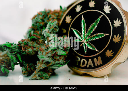 Cannabis plant 'Buds' and grinder Gelato - Stock Photo