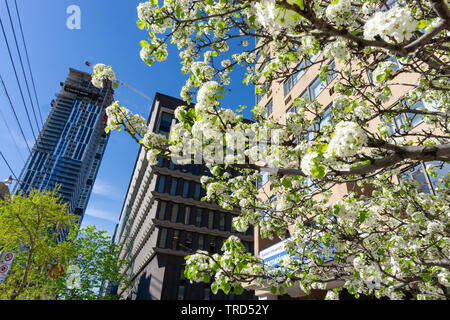 I love spring in my city. There is so much greenery everywhere. The whole downtown is blooming! - Stock Photo