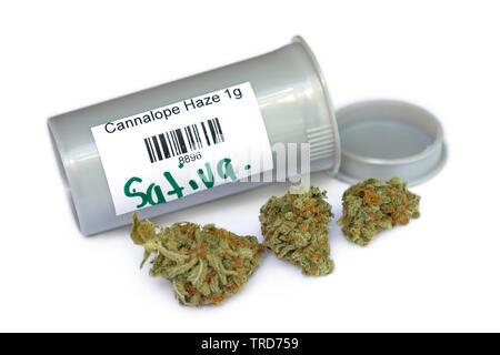 Cannabis Sativa, Dried Cannabis Flower, Buds, Bud, Cannalope Haze Strain - Stock Photo