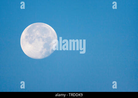 moon in clear bly sky at daylight, Netherlands, South Holland, Katwijk aan Zee - Stock Photo
