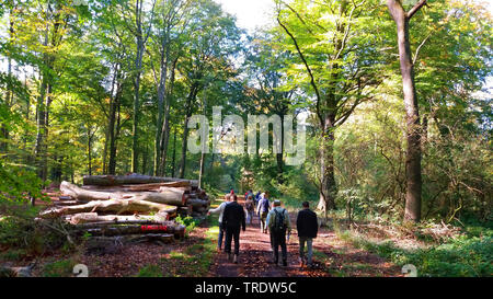 excursion group in a forest, Germany, North Rhine-Westphalia, Ruhr Area, Gelsenkirchen - Stock Photo