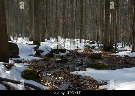 Bach im Winterwald, Deutschland, Bayern, Bayerischer Wald Nationalpark | brook in winter forest, Germany, Bavaria, Bavarian Forest National Park | BLW - Stock Photo