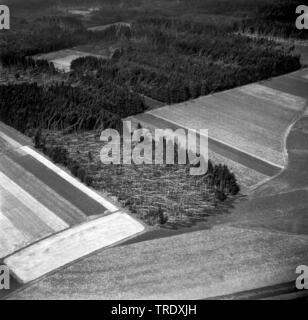 storm losses in a forest at Ingolstadt, aerial photo from the year 1960, Germany, Bavaria, Oberbayern, Upper Bavaria - Stock Photo